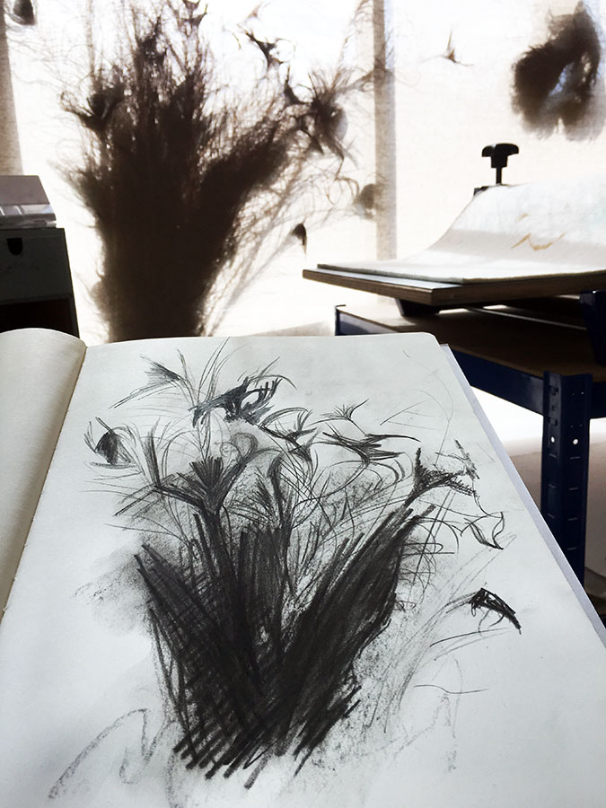 sketching feathers